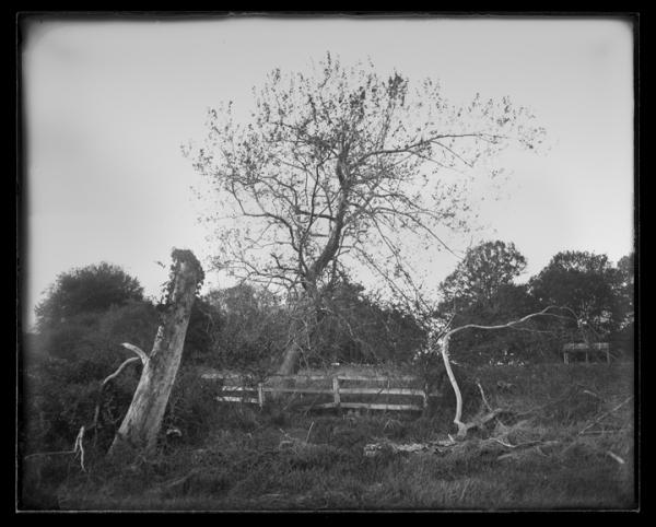 Farm_trees_Scottsville